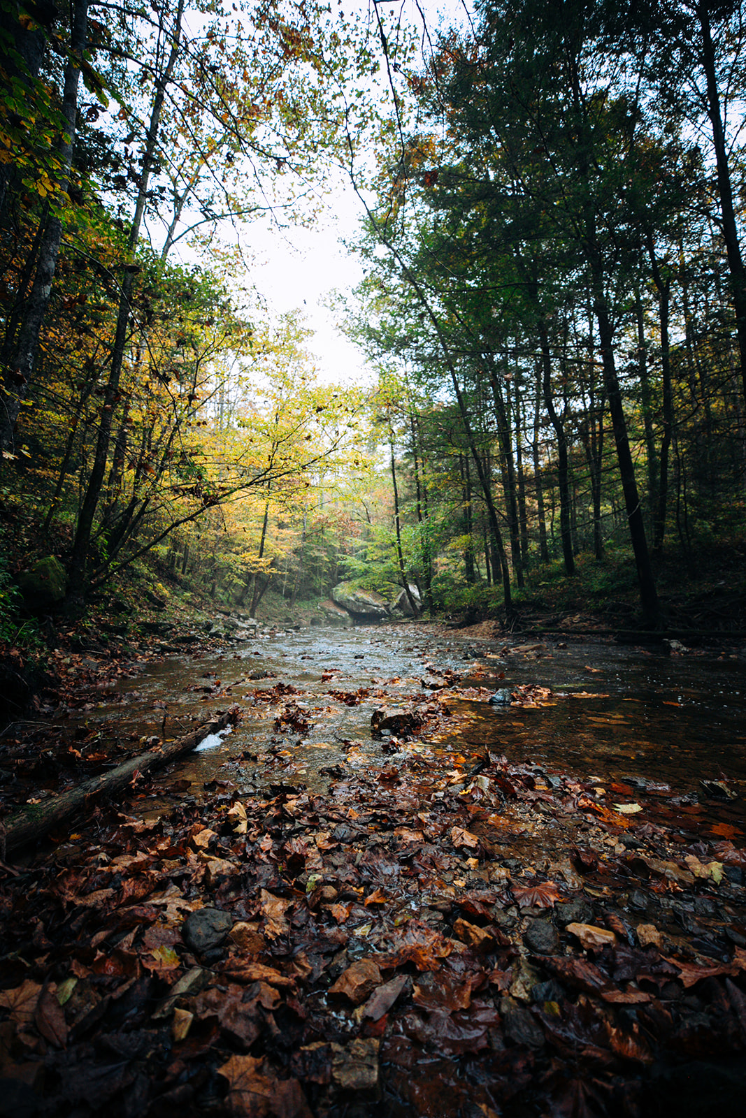 Red River Gorge Weddings